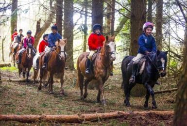 Noakes Farm Riding Centre